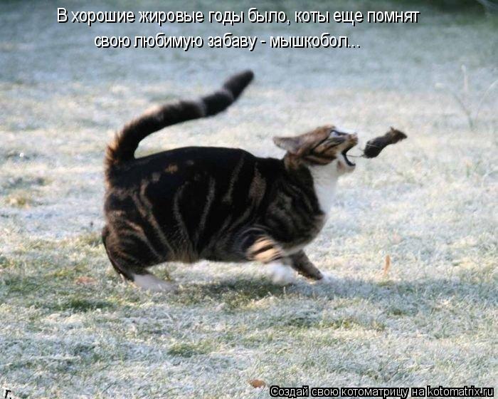 Котоматрица: В хорошие жировые годы было, коты еще помнят  свою любимую забаву - мышкобол...