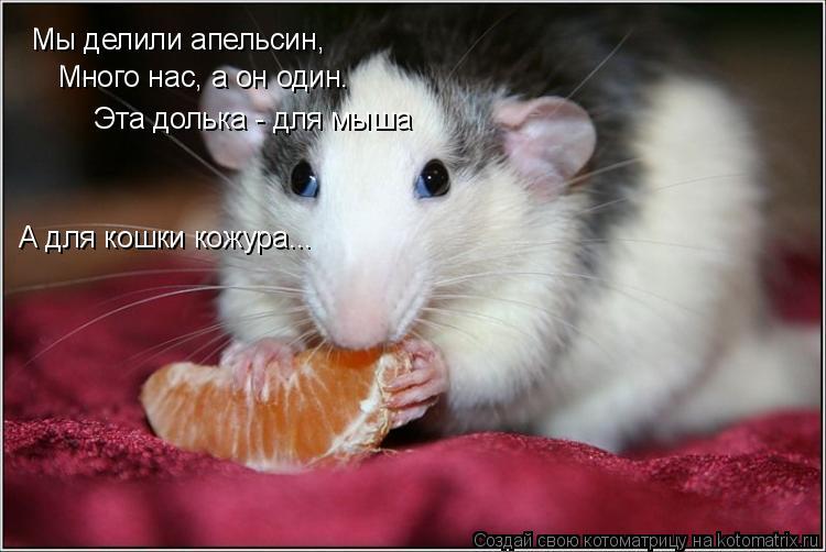 Котоматрица: Мы делили апельсин, Много нас, а он один. Эта долька - для мыша А для кошки кожура...