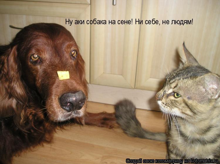 Котоматрица: Ну аки собака на сене! Ни себе, не людям!