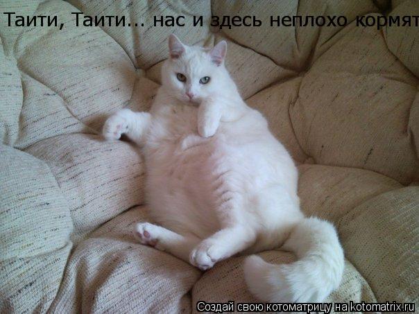 Котоматрица: Таити, Таити... нас и здесь неплохо кормят))) Таити, Таити... нас и здесь неплохо кормят)))