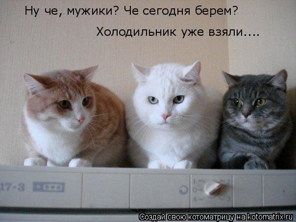 Котоматрица: Ну че, мужики? Че сегодня берем? Холодильник уже взяли....