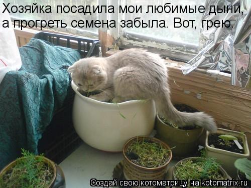 Котоматрица: Хозяйка посадила мои любимые дыни,  а прогреть семена забыла. Вот, грею.