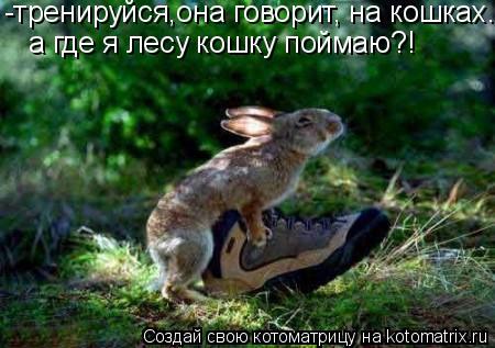 Котоматрица: а где я лесу кошку поймаю?! -тренируйся,она говорит, на кошках.