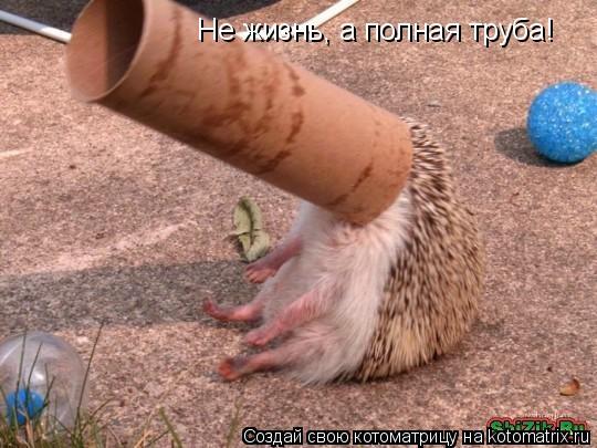 Котоматрица: Не жизнь, а полная труба!