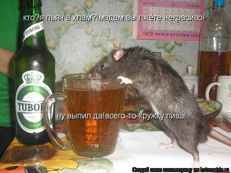 Котоматрица: кто?я пьян в хлам?!мадам,вы лжёте некрасиво! ну выпил,да!всего-то-кружку пива!