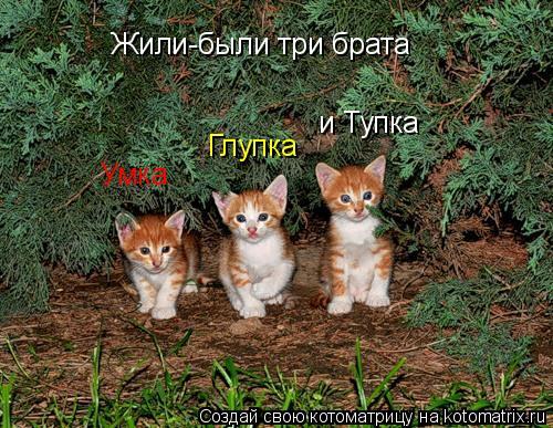 Котоматрица: Жили-были три брата Умка Глупка и Тупка