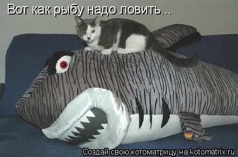 Котоматрица: Вот как рыбу надо ловить...