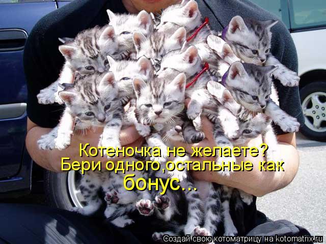 Котоматрица: Котеночка не желаете? Бери одного,остальные как  бонус...