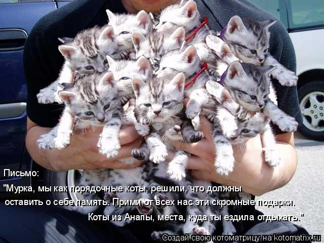 """Котоматрица: """"Мурка, мы как порядочные коты, решили, что должны оставить о себе память. Прими от всех нас эти скромные подарки. Коты из Анапы, места, куда т"""