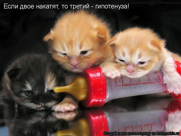 Котоматрица: Если двое накатят, то третий - гипотенуза!