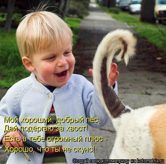 Котоматрица: Мой хороший, добрый пёс, Дай подёргаю за хвост! Есть в тебе огромный плюс - Хорошо, что ты не скунс!
