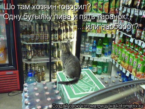Котоматрица: Шо там хозяин говорил? Одну бутылку пива и пять таранок... ... или наоборот?