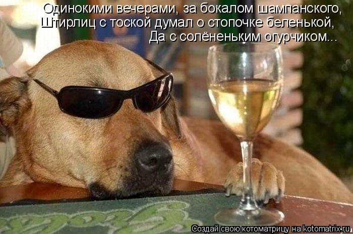 Котоматрица: Одинокими вечерами, за бокалом шампанского, Штирлиц с тоской думал о стопочке беленькой, Да с солёненьким огурчиком...