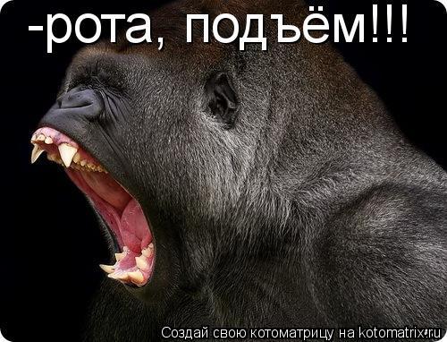 Котоматрица: -рота, подъём!!!