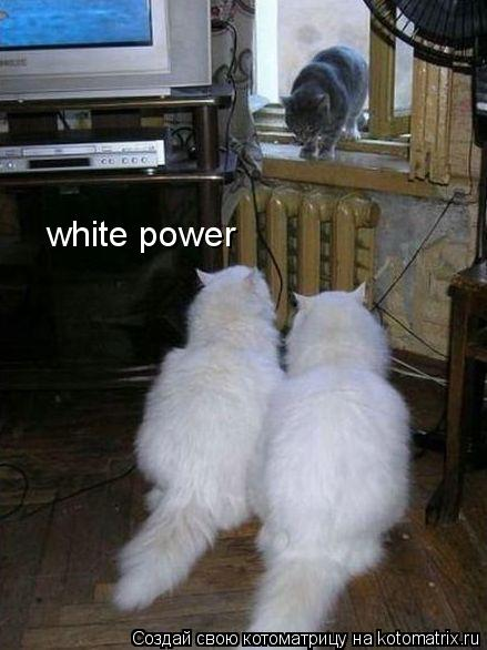 Котоматрица: white power