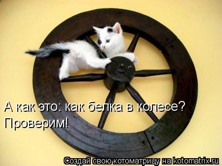 Котоматрица: А как это: как белка в колесе? Проверим!