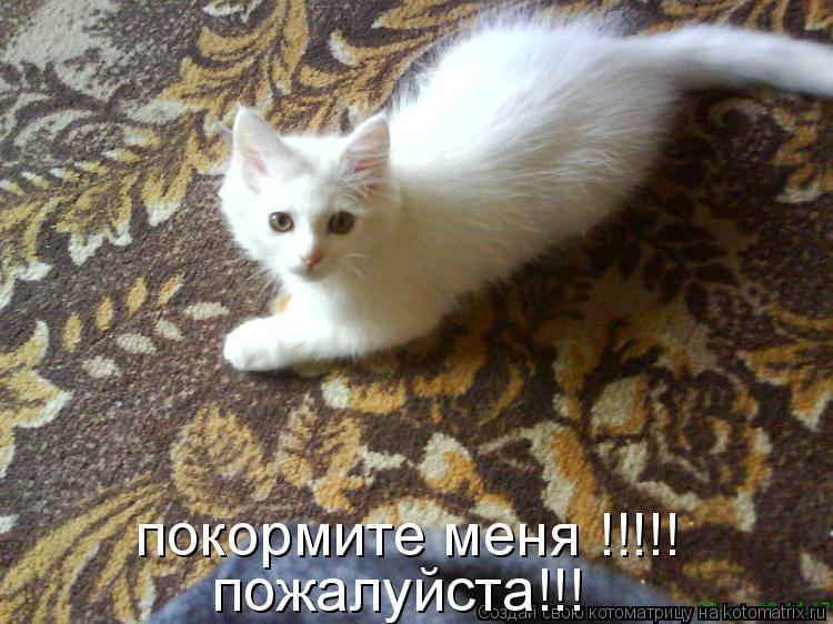 Котоматрица: покормите меня !!!!! пожалуйста!!!