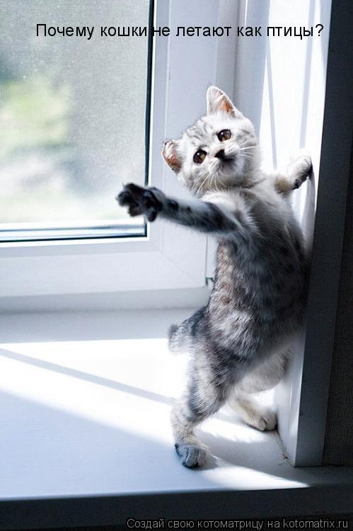 Котоматрица: Почему кошки не летают как птицы?