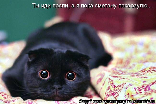 Котоматрица: Ты иди поспи, а я пока сметану покараулю...