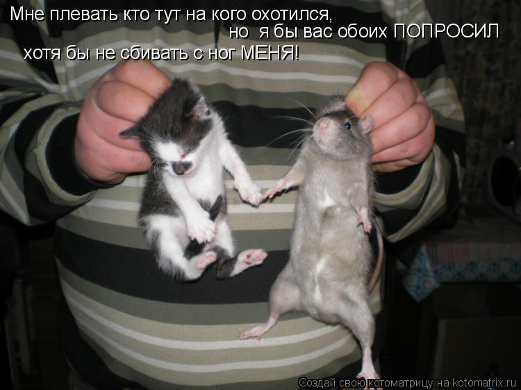 Котоматрица: Мне плевать кто тут на кого охотился, но  я бы вас обоих ПОПРОСИЛ хотя бы не сбивать с ног МЕНЯ!