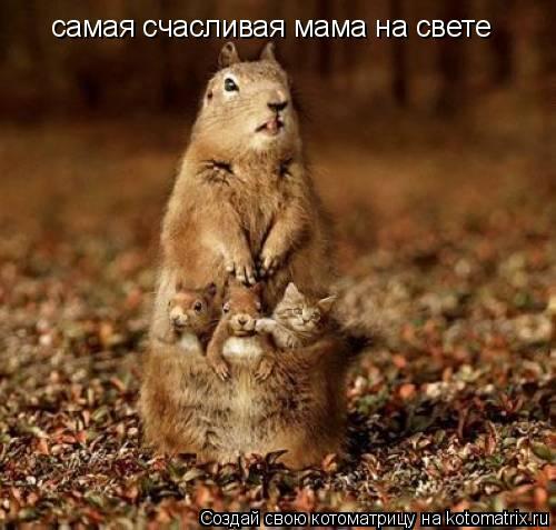 Котоматрица: самая счасливая мама на свете