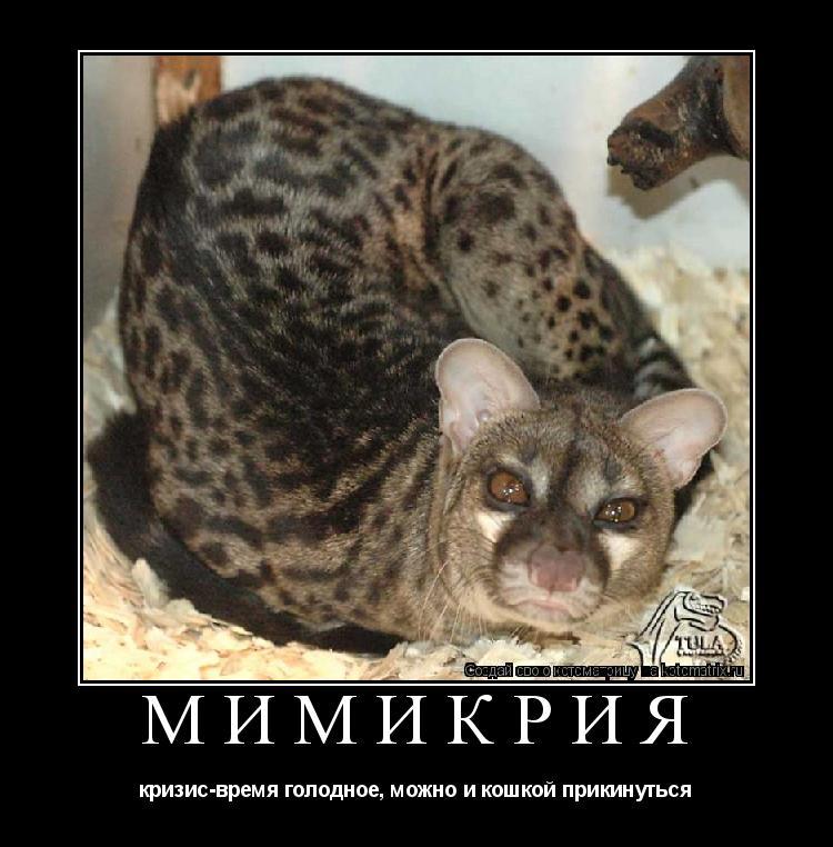 Котоматрица: Мимикрия кризис-время голодное, можно и кошкой прикинуться