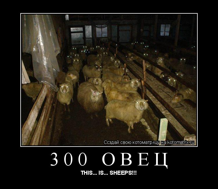 Котоматрица: 300 овец THIS... IS... SHEEPS!!!