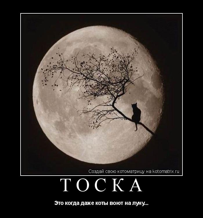 Котоматрица: Тоска Это когда даже коты воют на луну...