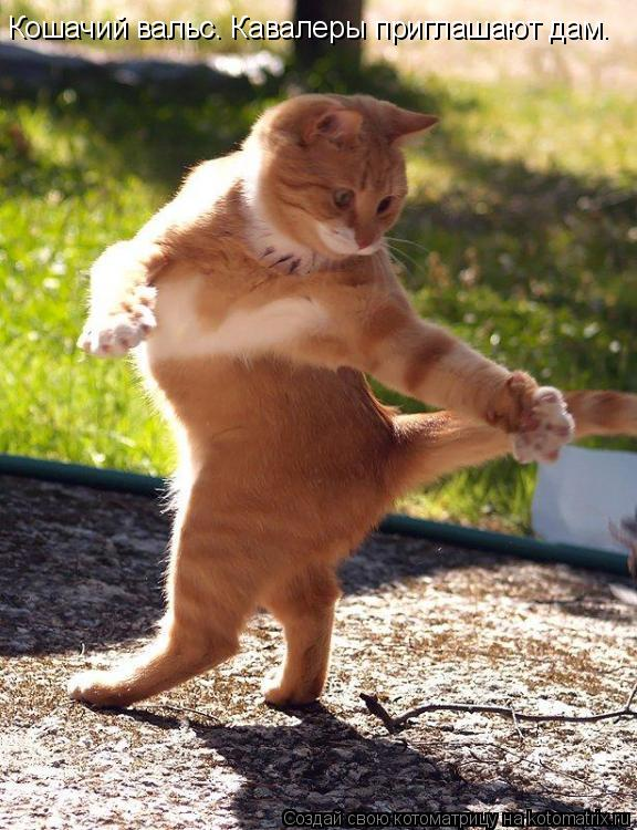 Котоматрица: Кошачий вальс. Кавалеры приглашают дам.