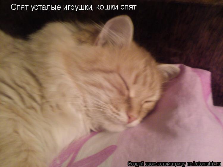 Котоматрица: Спят усталые игрушки , кошки спят