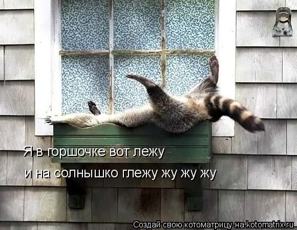 Котоматрица: Я в горшочке вот лежу и на солнышко глежу жу жу жу