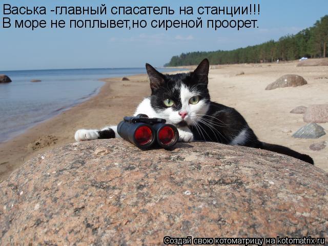 Котоматрица: Васька -главный спасатель на станции!!! В море не поплывет,но сиреной проорет.
