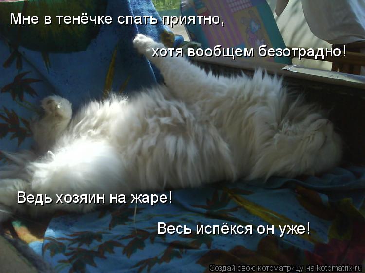 Котоматрица: Мне в тенёчке спать приятно, Ведь хозяин на жаре! Весь испёкся он уже! хотя вообщем безотрадно!