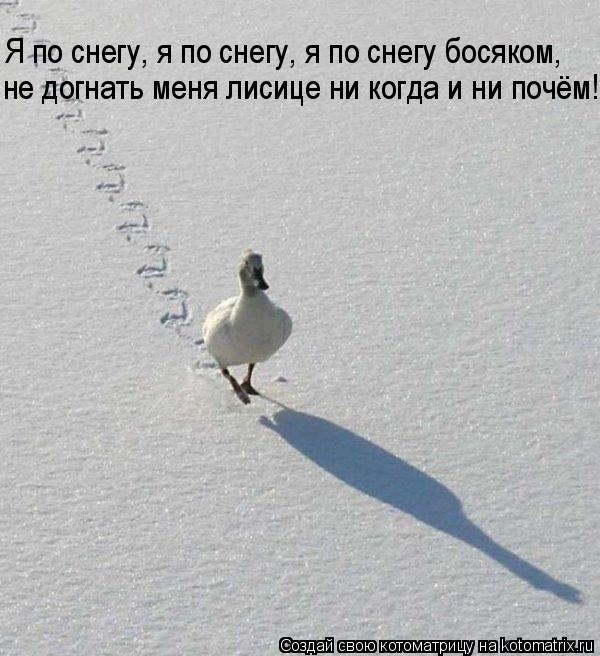 Котоматрица: Я по снегу, я по снегу, я по снегу босяком, не догнать меня лисице ни когда и ни почём!