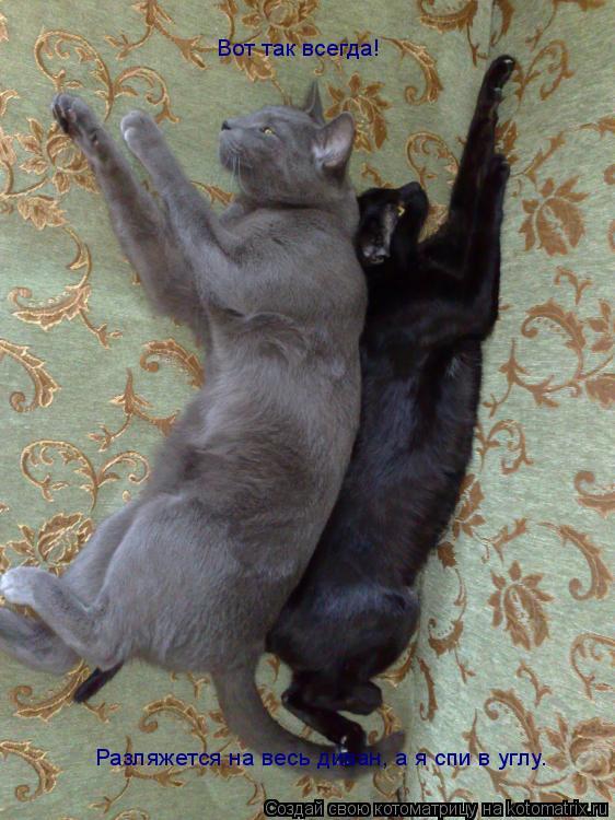 Котоматрица: Разляжется на весь диван, а я спи в углу. Вот так всегда!