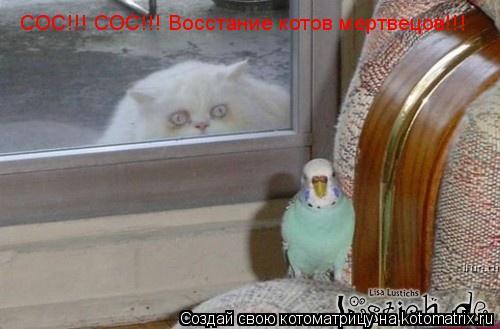 Котоматрица: СОС!!! СОС!!! Восстание котов мертвецов!!!