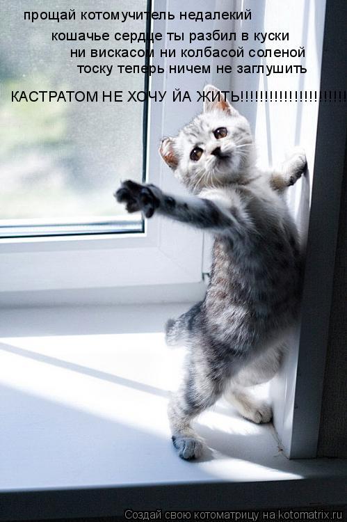 Котоматрица: прощай котомучитель недалекий кошачье сердце ты разбил в куски ни вискасом ни колбасой соленой тоску теперь ничем не заглушить КАСТРАТОМ
