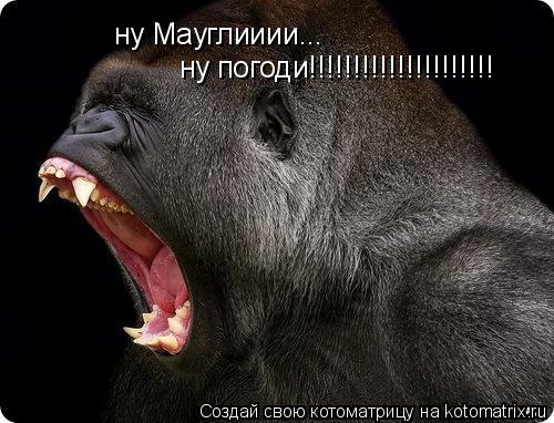 Котоматрица: ну Мауглииии... ну погоди!!!!!!!!!!!!!!!!!!!!!