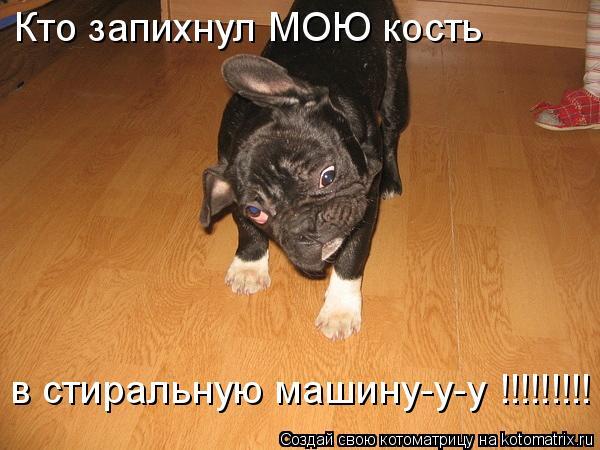 Котоматрица: Кто запихнул МОЮ кость  в стиральную машину-у-у !!!!!!!!!
