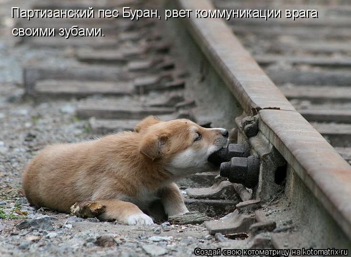 Котоматрица: Партизанский пес Буран, рвет коммуникации врага своими зубами.