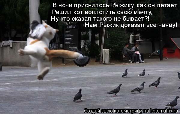 Котоматрица: В ночи приснилось Рыжику, как он летает, Решил кот воплотить свою мечту, Ну кто сказал такого не бывает?! Нам Рыжик доказал всё наяву!
