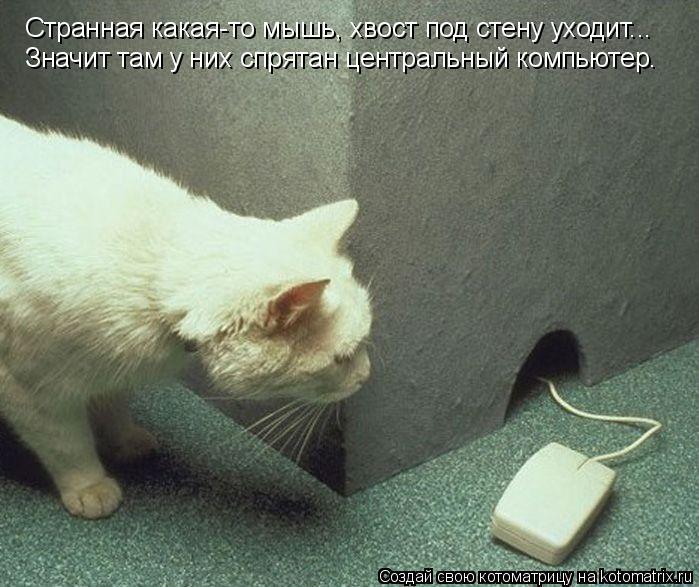 Котоматрица: Странная какая-то мышь, хвост под стену уходит... Значит там у них спрятан центральный компьютер.