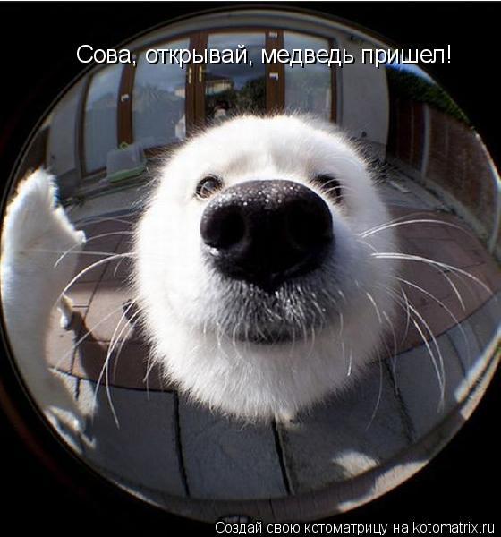 Котоматрица: Сова, открывай, медведь пришел!
