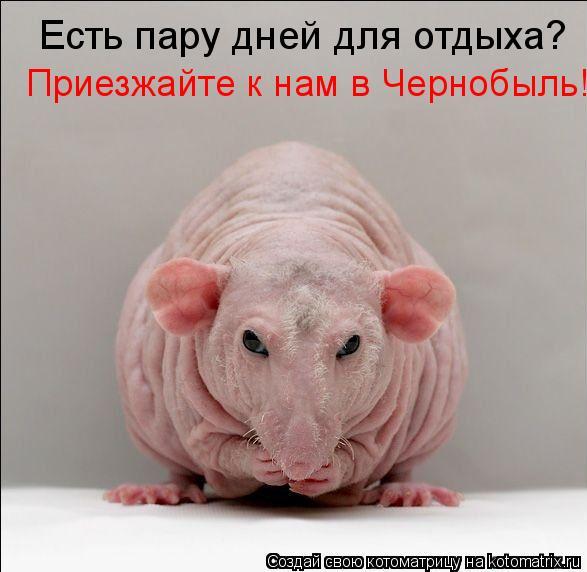 Котоматрица: Есть пару дней для отдыха? Приезжайте к нам в Чернобыль!
