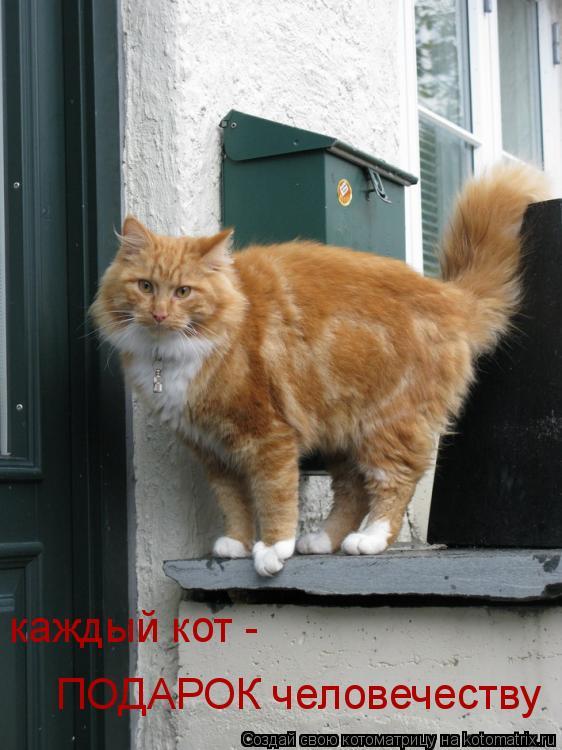 Котоматрица: каждый кот -  ПОДАРОК человечеству