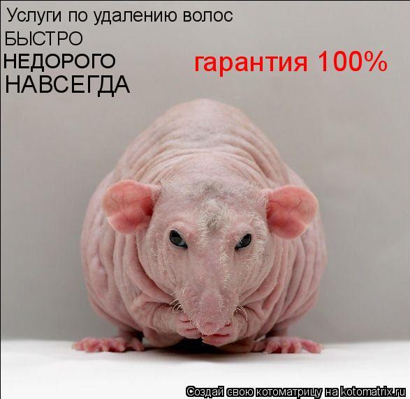 Котоматрица: Услуги по удалению волос БЫСТРО НЕДОРОГО НАВСЕГДА гарантия 100%