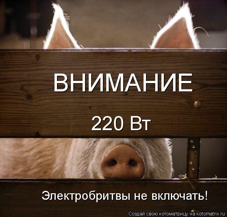 Котоматрица: 220 Вт Электробритвы не включать! ВНИМАНИЕ