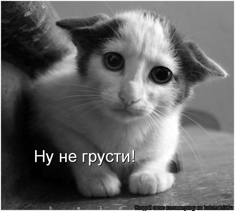 Котоматрица: Ну не грусти!