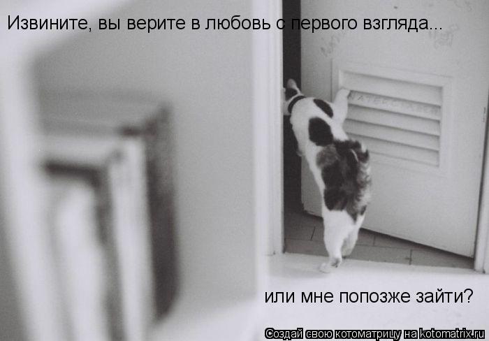 Котоматрица: Извините, вы верите в любовь с первого взгляда... или мне попозже зайти?