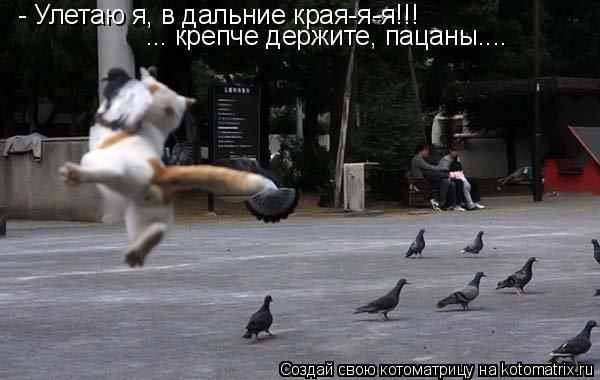 Котоматрица: - Улетаю я, в дальние края-я-я!!! ... крепче держите, пацаны....